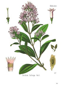 China Officinalis